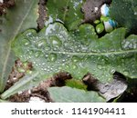 the frozen rain drops. the...   Shutterstock . vector #1141904411