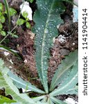 the frozen rain drops. the...   Shutterstock . vector #1141904414