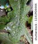 the frozen rain drops. the...   Shutterstock . vector #1141904444