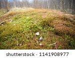 sphagnum covered hillock | Shutterstock . vector #1141908977