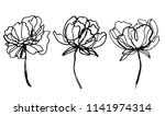 Set Of Peony Flowers Drawings....