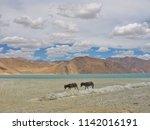 two little donkeys are walking... | Shutterstock . vector #1142016191