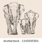 hand drawn sketch of elephant... | Shutterstock .eps vector #1142035301