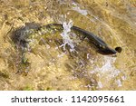 a fish on a hook fighting in... | Shutterstock . vector #1142095661