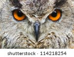 Stock photo owl eagle very close up detail face 114218254