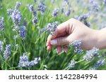 woman hand picking flower in... | Shutterstock . vector #1142284994