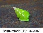 emerald green snail or green... | Shutterstock . vector #1142339087