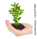 Young Plant In Hand Isolated O...