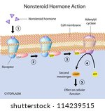 Nonsteroid hormones action - stock photo