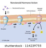 Nonsteroid hormones action - stock vector
