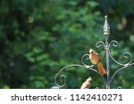 female northern cardinal... | Shutterstock . vector #1142410271