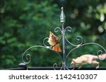 female northern cardinal... | Shutterstock . vector #1142410307