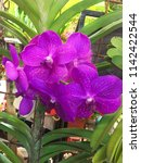 fresh beautiful vivid colorful...   Shutterstock . vector #1142422544