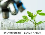 young sample plant growing in... | Shutterstock . vector #1142477804