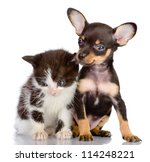 Stock photo sad kitten and smiling dog isolated on a white background 114248221