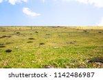 High Altitude Alp Meadow...