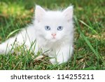 Stock photo beautiful white kitten in the park on the grass 114255211