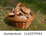 harvested at autumn amazing... | Shutterstock . vector #1142579591