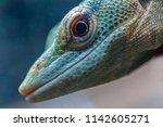 head lizard macro | Shutterstock . vector #1142605271