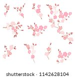 free hand sakura flower vector... | Shutterstock .eps vector #1142628104