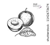 hand drawn whole and half plum. ...   Shutterstock .eps vector #1142673674
