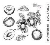 hand drawn whole plum  slice... | Shutterstock .eps vector #1142673677