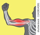 muscle power  sectioned vector... | Shutterstock .eps vector #1142814281