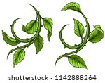graphic cartoon green rose... | Shutterstock .eps vector #1142888264