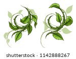 graphic cartoon green rose... | Shutterstock .eps vector #1142888267