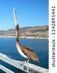 Pelican Perched On The Pier At...