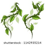 graphic cartoon detailed green... | Shutterstock .eps vector #1142935214