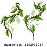 graphic cartoon detailed green... | Shutterstock .eps vector #1142935214