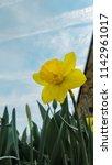 aspang  austria   april 20 ...   Shutterstock . vector #1142961017