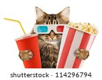 Stock photo cat watching a movie 114296794