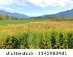 acres of cultivatable farm land ... | Shutterstock . vector #1142983481