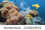 beautiful coral reef with sea... | Shutterstock . vector #1143014921