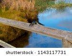 two dainty delightful  little... | Shutterstock . vector #1143117731