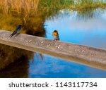 two dainty delightful  little... | Shutterstock . vector #1143117734