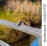 two dainty delightful  little... | Shutterstock . vector #1143117737