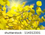 autumn background | Shutterstock . vector #114312331