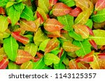 droplets of water on colorful... | Shutterstock . vector #1143125357