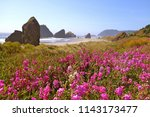 Pink Foxglove Flowers Along Th...