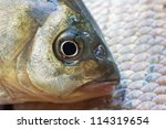macro shot of  fish head.... | Shutterstock . vector #114319654