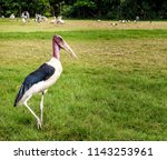 animals wildlife photography  | Shutterstock . vector #1143253961