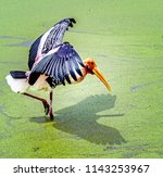 animals wildlife photography  | Shutterstock . vector #1143253967