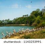 animals wildlife photography  | Shutterstock . vector #1143253991