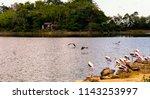animals wildlife photography  | Shutterstock . vector #1143253997