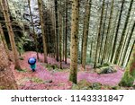 schwarzwald forests  germany. | Shutterstock . vector #1143331847