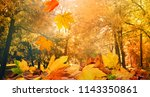 maple leaves tree natural... | Shutterstock . vector #1143350861