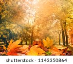 autumn leaves background | Shutterstock . vector #1143350864